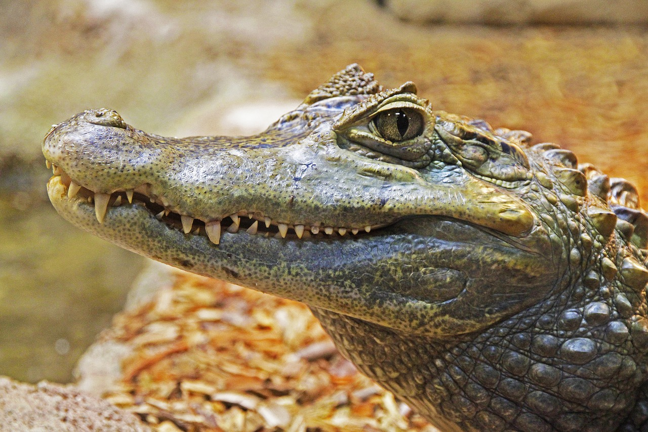Gator Financial Partners gse preferred shares