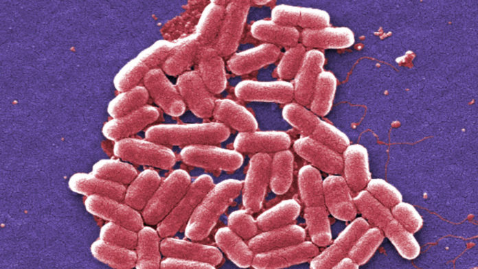 Child dies from E. Coli complications in Novato