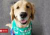 SoftBank selling its stake in dog-walking app