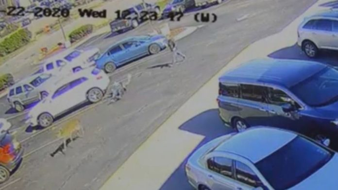 WATCH: Oh deer! NC man gets plowed over by animal in a McDonald's parking lot