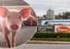 Coronavirus pressure mounts on Tyson Foods after hundreds more workers test positive